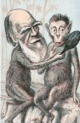 Darwin und Affe